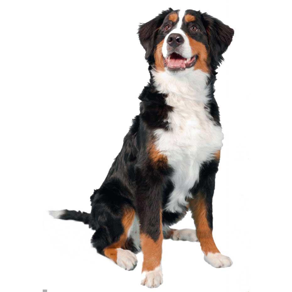 Beaucoup de races de chien existent… on s'y perd !